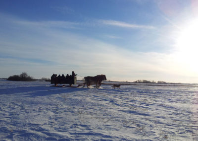 Beautiful chilly day for a sleigh ride.